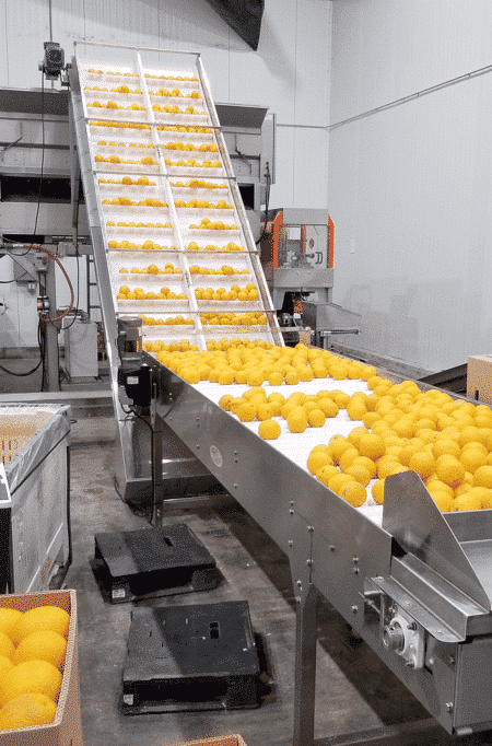 Ag-Pak Citrus In-Feed Elevator Installation